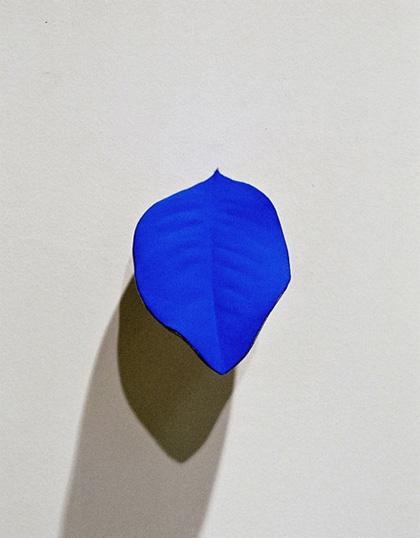 magnolia, 2003